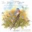 The Bluebird Effect : Uncommon Bonds With Common Birds